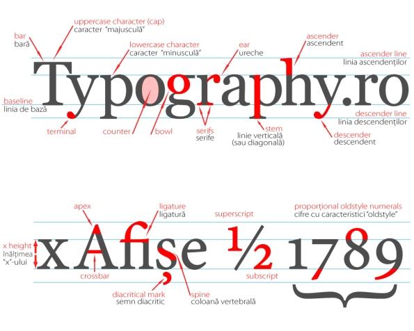 grafic anatomia fonturilor - click pe imagine pentru mărire